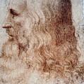 Leonardo Da Vinci by Granger