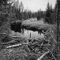 Liesijoki.  Seitseminen National Park by Jouko Lehto