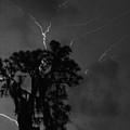 Lightning by Larah McElroy