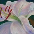 Lily by Jackie Bush-Turner