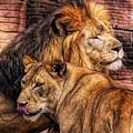 Lion Mates by Paulette Thomas