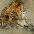 Lion On The Rocks by Jaroslaw Blaminsky