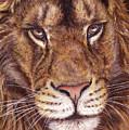 Lion Portrait by Svetlana Ledneva-Schukina