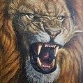 Lion Roar by Alexandru Burca