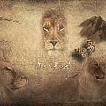 Lions by Maria Astedt