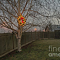 Lit Christmas Wreath Hanging In Tree by Jim Corwin
