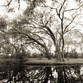 Live Oak Reflections by Dustin K Ryan