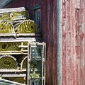 Lobster Traps by Stephanie Moore