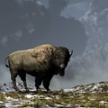 Lonely Bison by Daniel Eskridge