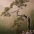 Lonesome Mountain Pine  by Glenn Ledford