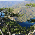 Look At The Pine Trees And The Lake by Predrag Lukic