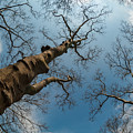 Looking Up by Dorota Niezgoda