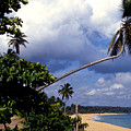 Los Tubos Beach by Thomas R Fletcher