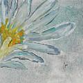 Lotus Flower  by Cori Solomon