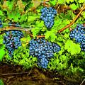 Lucious Grapes by Rick Bragan