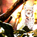 Lynx by Lora Battle