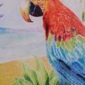 Macaw by Uzor Dijeh