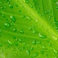 Macro Closeup Of Waterdrops On A Leaf by John Williams