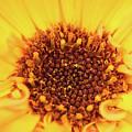 Macro Shot Of A Yellow Flower. by Wael Alreweie