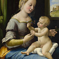 Madonna Of The Pinks by Raffaello Sanzio