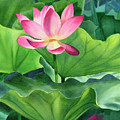 Magenta Lotus Blossom by Sharon Freeman