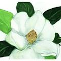 Magnolia II by Joan Zepf