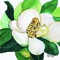 Magnolia Iv by Joan Zepf