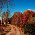 Maine Fall by Doug Mills