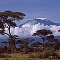 Majestic Mount Kilimanjaro by Michele Burgess