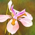 Mama's Iris by Alice Gipson