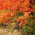 Maple Fire by Joni  Strickfaden