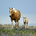 Mare And Foal by Out West Originals
