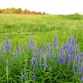 Meadow Flowers by Edward Nekrasov