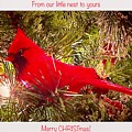 A Merry Christmas by Diane Lindon Coy