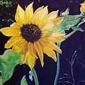 Midday Sunflower by Andreia Medlin