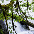 Lower North Falls by Robert Potts