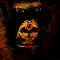 Mighty Gorilla by Jaroslaw Blaminsky