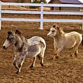 Miniature Horse by Crystal Garner