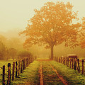 Misty Autumn Morning by Pixabay