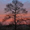 Misty Dawn by Kathryn Meyer