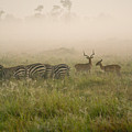 Misty Morning On The Savannah by Michele Burgess