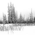 Misty Reeds by Roland Stanke