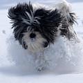 Misty Runs Through The Snow by Cliff Norton
