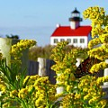 Monarch At East Point Light by Nancy Patterson