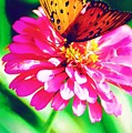 Monarch Butterfly by Donna Bentley