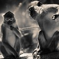 Monkeys by FL collection