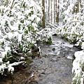 Monongahela National Forest by Thomas R Fletcher