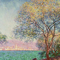 Morning At Antibes by Claude Monet