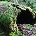 Moss by Naman Imagery
