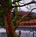 Mossy Tree Leaning Over The Smooth River Wharfe by Dennis Dame